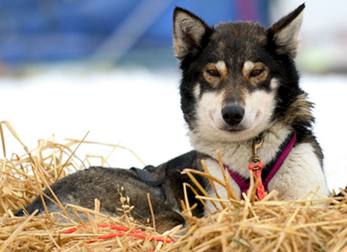 Kynndalen Huskies stammor, Masi