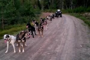 Team Bjørnar Andersen har kommet i gang med høsttreningen i Sørskogbygda,